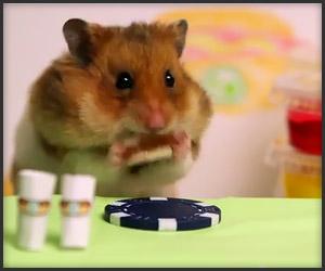 Hamster vs Kobayashi