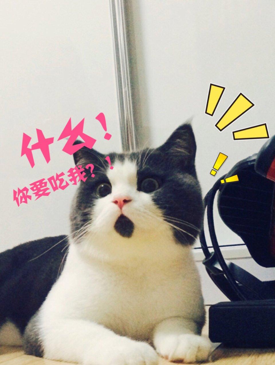 Perpetually Surprised Cat