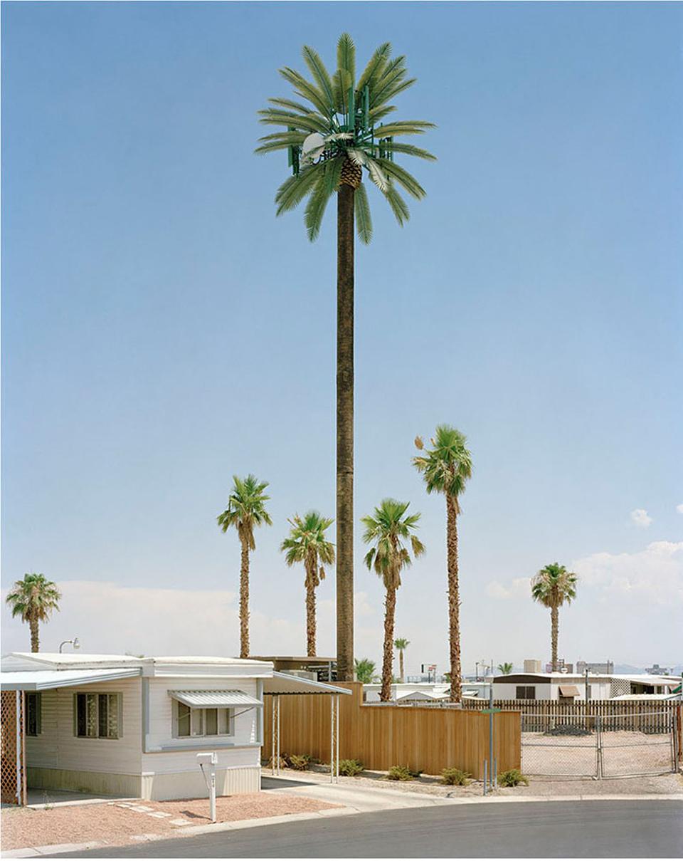 Robert Voit: New Trees