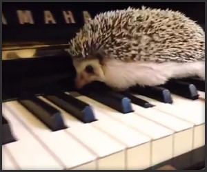Jazz Hedgehog
