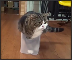 Maru Never Gives up