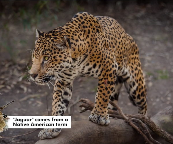 51 Astounding Animal Facts