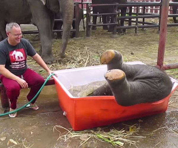 Baby Elephant Loves Bath Time