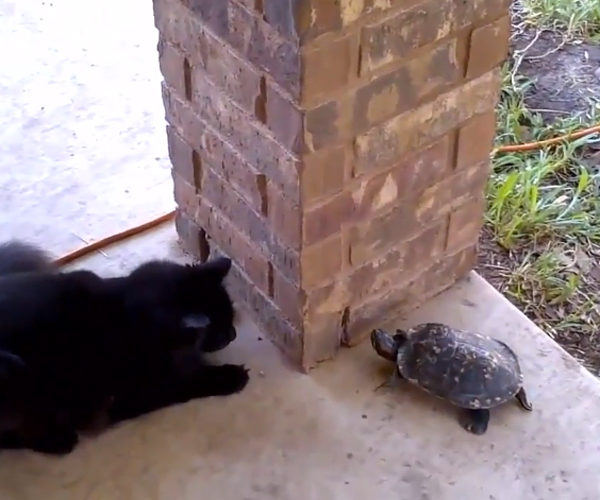 Cat & Turtle Play Tag