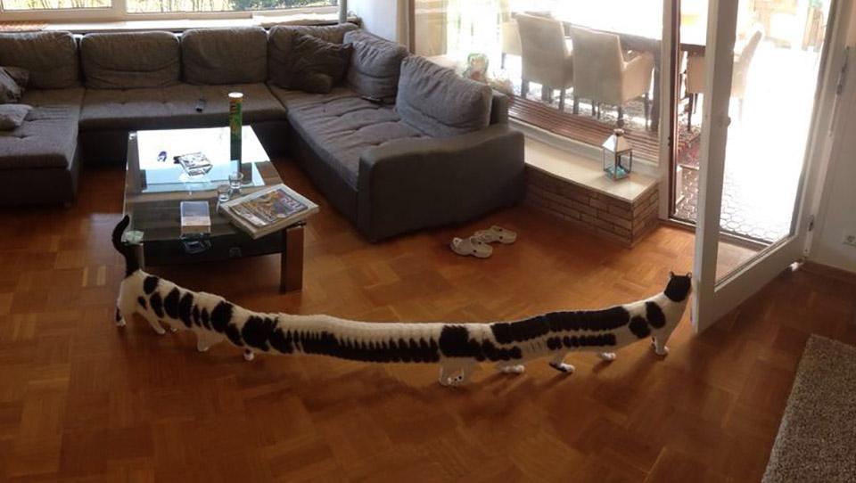 The Longest Cat