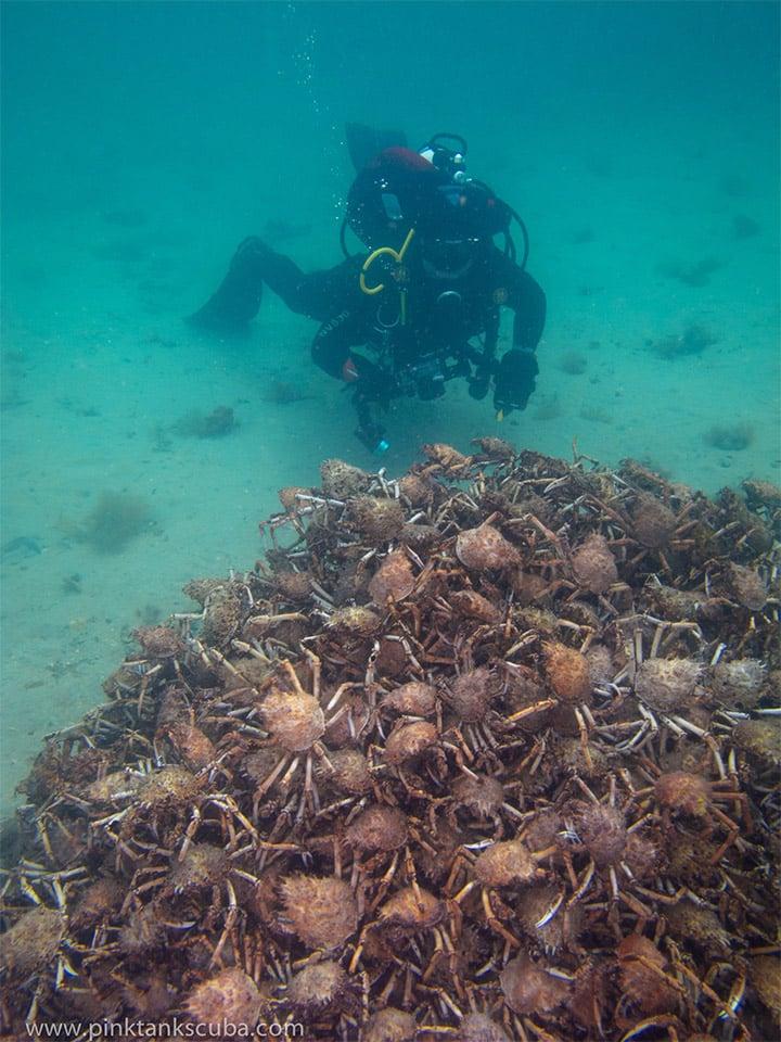 Spider Crab Pyramid