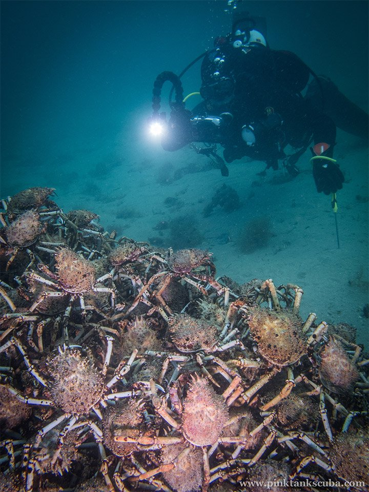 Spider Crab Pyramid