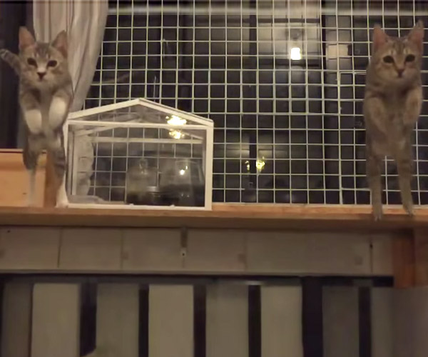 Slow-Mo Cat Duo