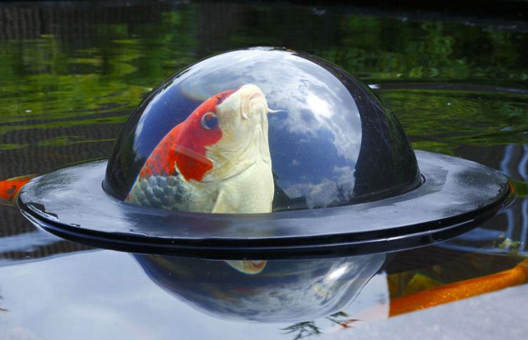 The Fish Dome
