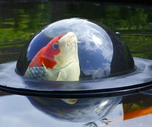The Fish Dome
