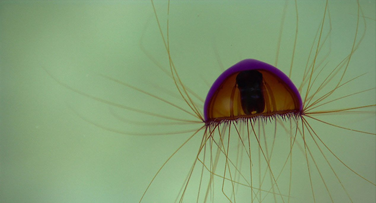 Unreal Undersea Creatures