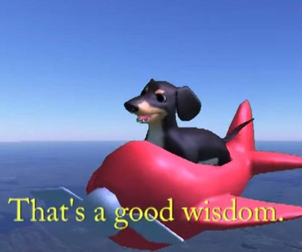 dog of wisdom