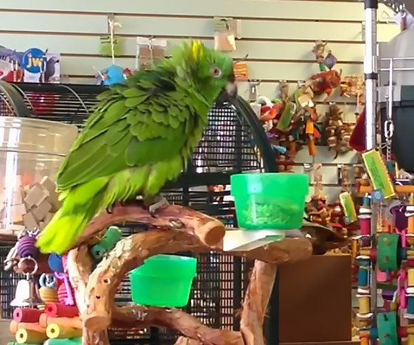 This Parrot is Awesome