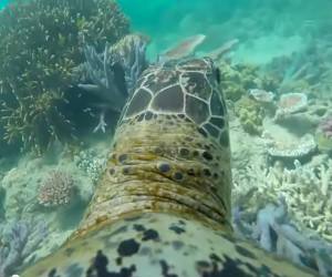 Turtle's Eye View