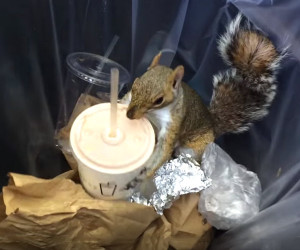 Milkshake Squirrel