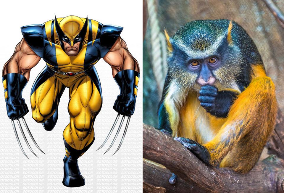 Wolverine Monkey
