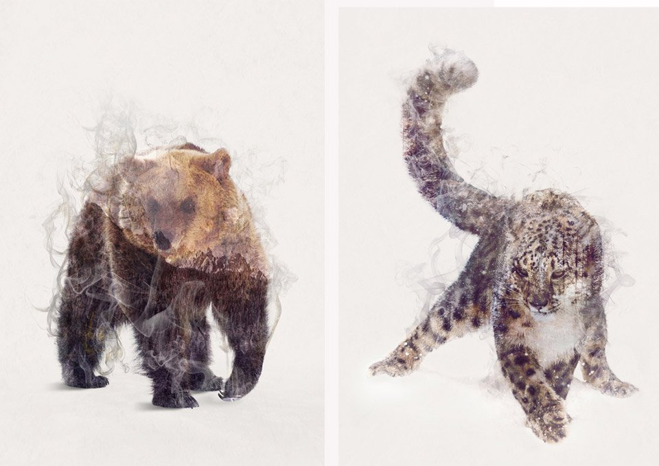 Dániel Taylor Animal Portraits
