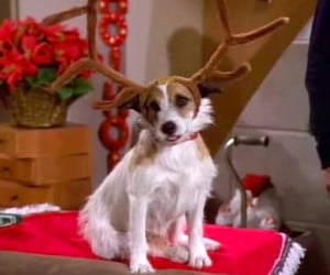 12 Days of Frasier