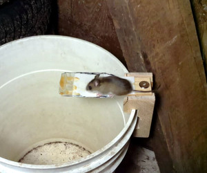 Building a Better Mouse Trap