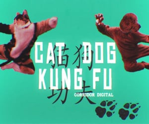 Cat Dog Kung Fu