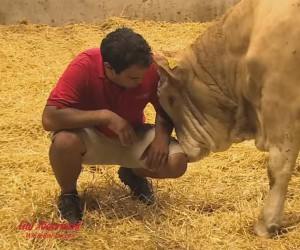 Rescued Cow Gives Thanks