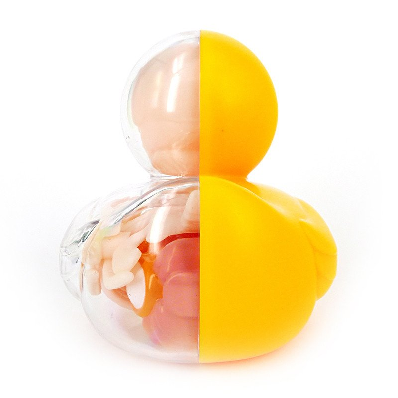 Ducky & Balloon Dog Anatomy Toys