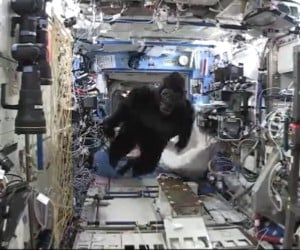 Gorilla in Space