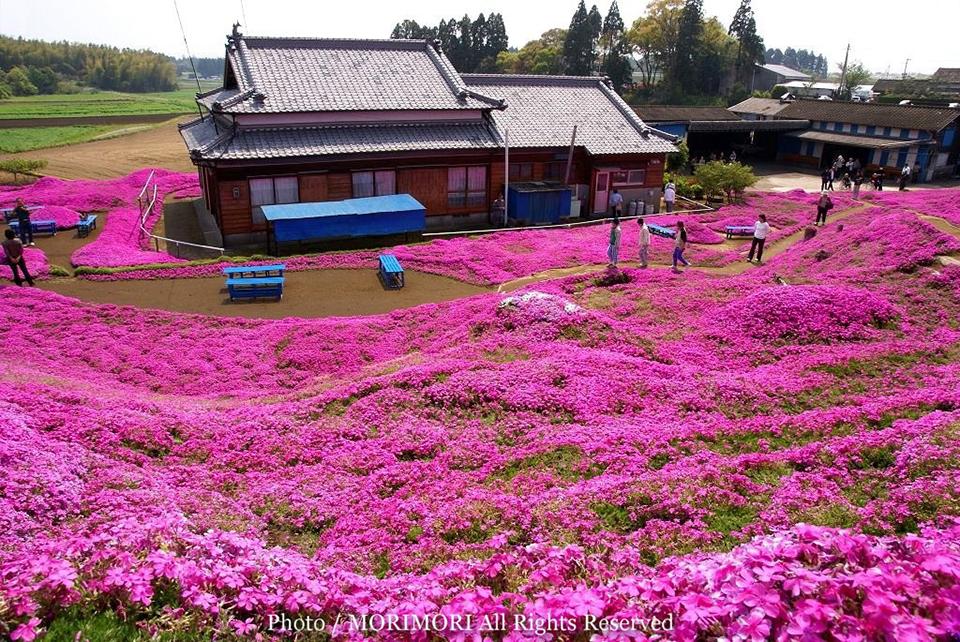 The Kuroki Home Garden