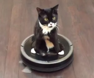 Roomba Wheelchair