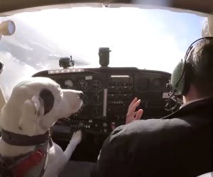 Dogs Learn to Fly