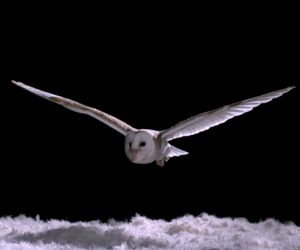 Owls' Silent Flight