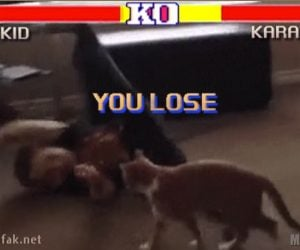 Street Fighter: Cat Edition
