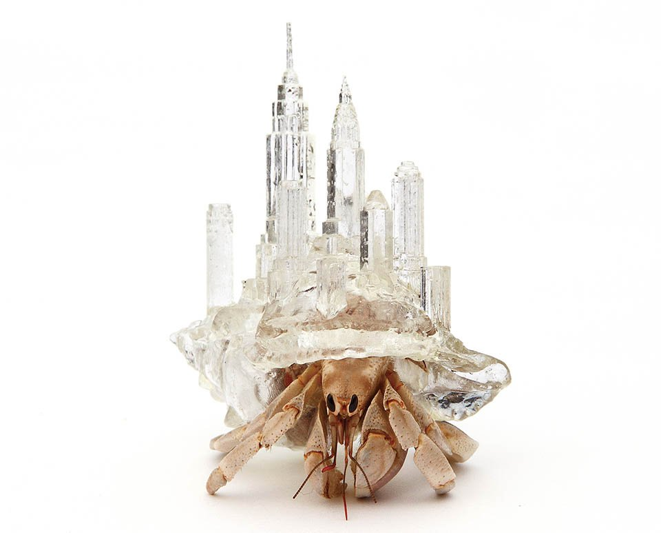 3D-printed Hermit Crab Shells