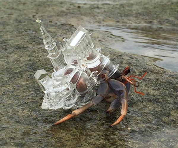3dprinted hermit crab shells