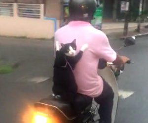 Moped Kitty
