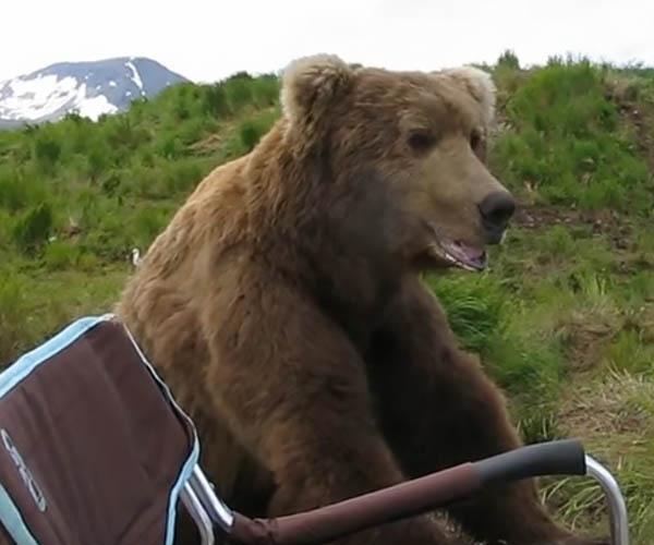 Bear Takes a Seat