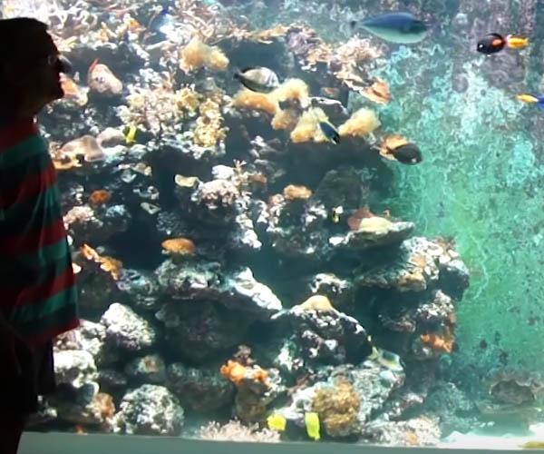 10,000 Gallon Home Aquarium