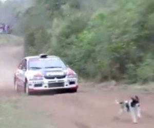 Rally Car vs Dog Close Call