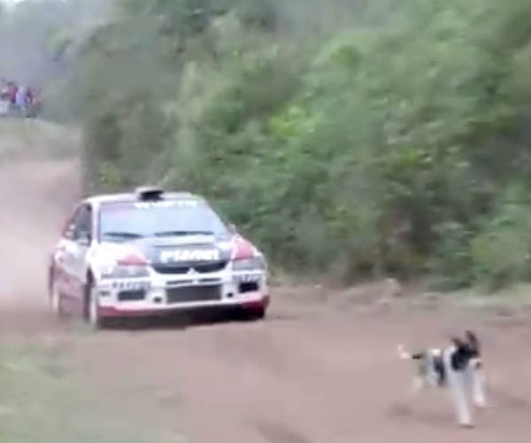 Rally Car vs Dog Close Call