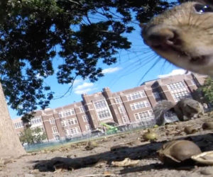 Squirrel Steals a GoPro