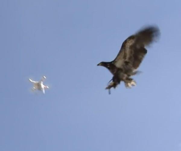 Eagle vs. Drone