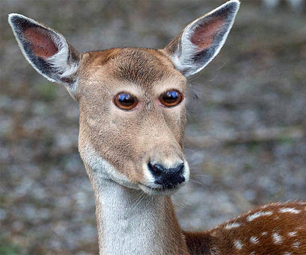 Animals with Eyes in Front