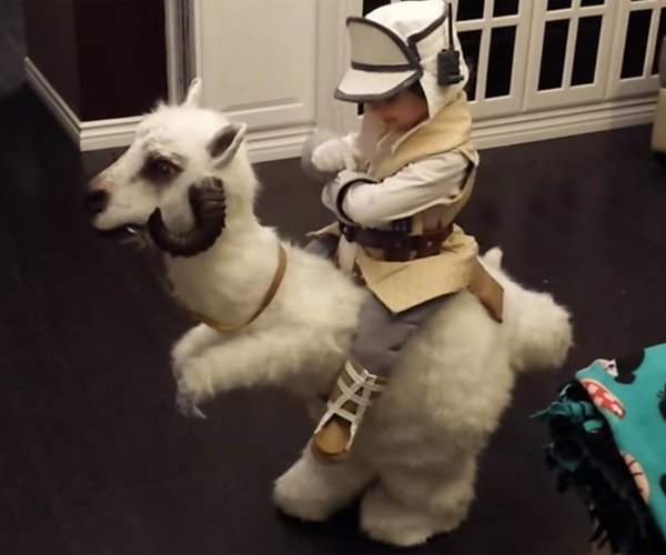 Kid Luke & Tauntaun Costume