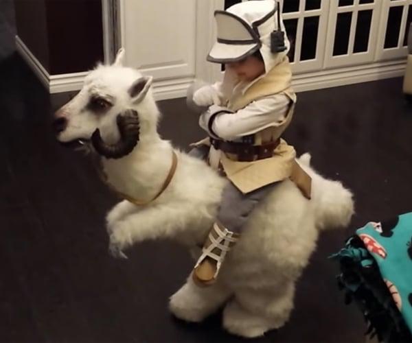 Kid Luke & Tauntaun Costume