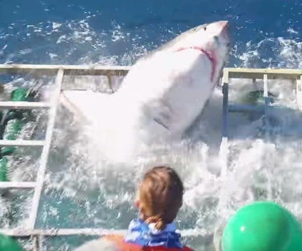 Shark Cage Mishap