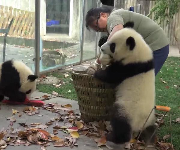 Baby Pandas Are Jerks