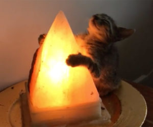 Cat Loves Lamp
