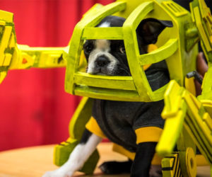 Puppy Power Loader