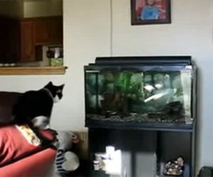 Cat, Fishing