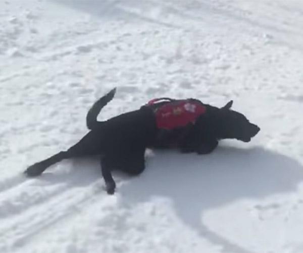 Literal Dog Sled